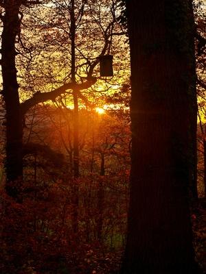 Abendlicht im Herbstwald