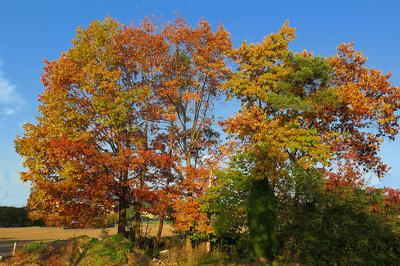 Oktobergold