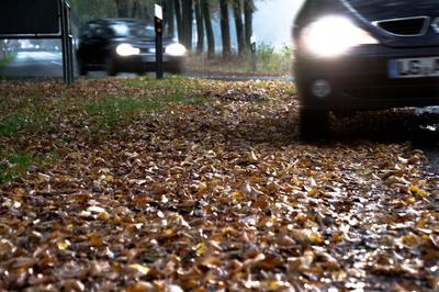 Gefahren des Herbstes (2)