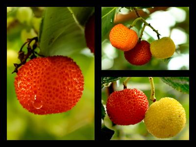 Natürliche Fruchtbonbons