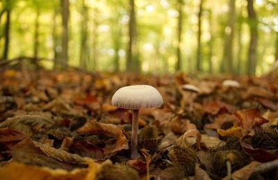 Einsamer Pilz..