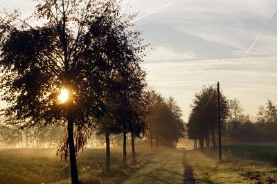 Herbstmorgen im Münsterland
