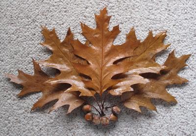 Gruß vom Herbst