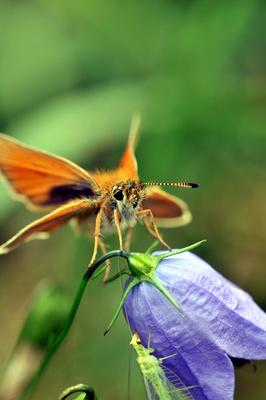 Sommerzeit Schmetterling