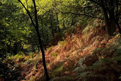 Der Herbst zieht in den Wald