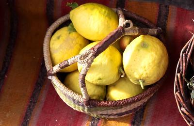 Zitronen vom Bauernhof