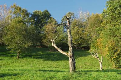 Baum-Skelett im Obstgarten