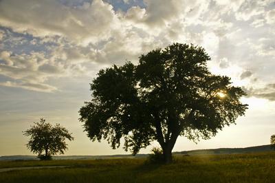 Baum im Sonnenuntergang im Spätsommer