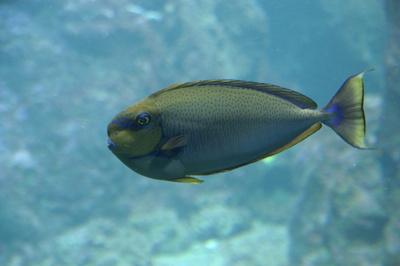unbekannter Tropenfisch