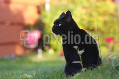 Lilly im Garten