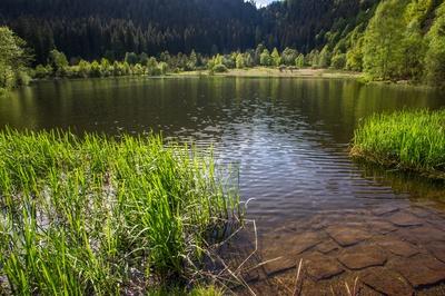 Schilfgräser am Karsee 2