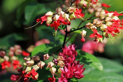 Blätter & Blumen
