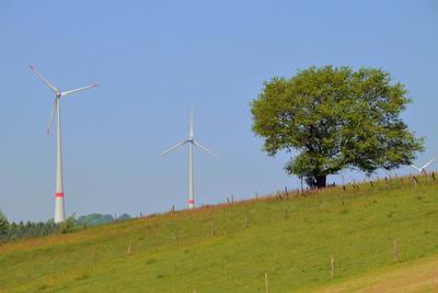 Baum mit Windrädern
