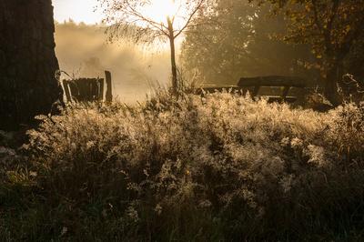 Leuchtender Morgentau