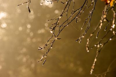 Leuchtender Morgentau (1)