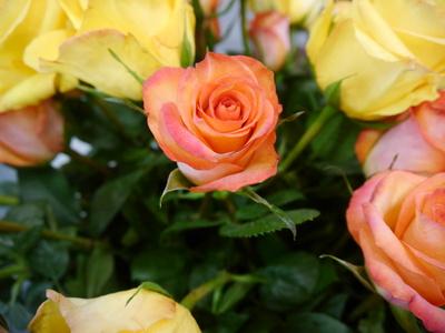 orange-rosen