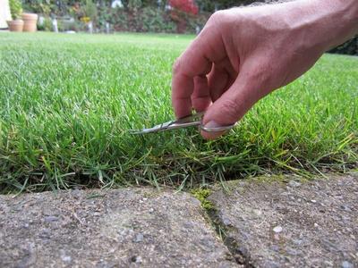 Rasen mit der Nagelschere schneiden