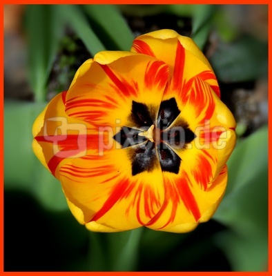 Blüten-Makro