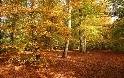buchenwald im november