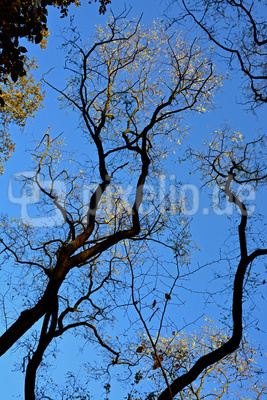Baumskulptur