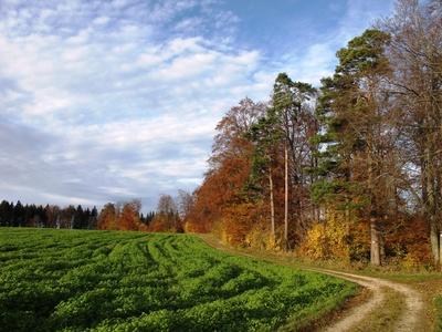 Durch Wald und Feld