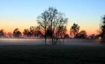 nebel in den wiesen  zur blauen stunde 2