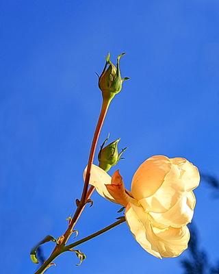 novemberblüte 2