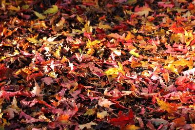 Herbstlaub 38