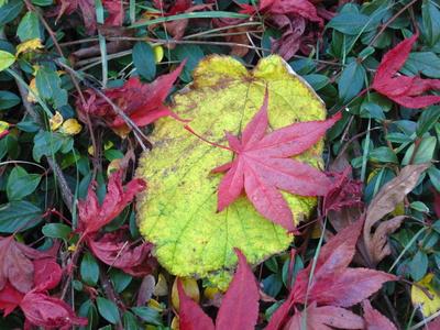 Herbstlaub, verschiedene Blätter und Farben