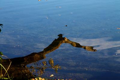 Herbstspiegel 02