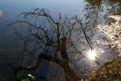sonniger Herbstspiegel
