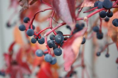 Herbstschönheiten-2