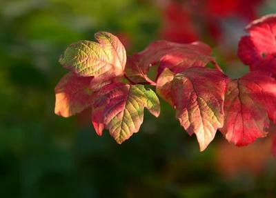 ...bunte Herbstblätter