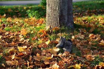 ...vergessen im Herbstlaub