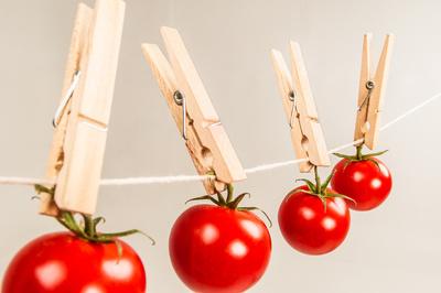 tomaten auf der leine