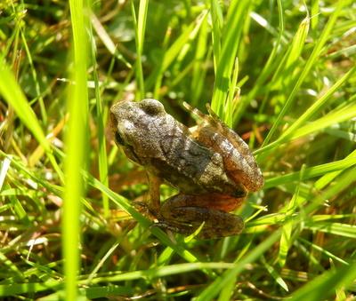 Im naturnahen Garten - Froschbaby