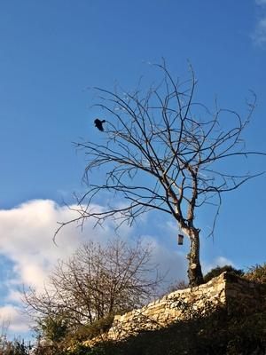 Ein Vogelbaum