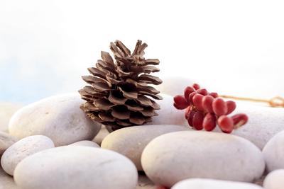 Zapfen und rote Palmfrüchte