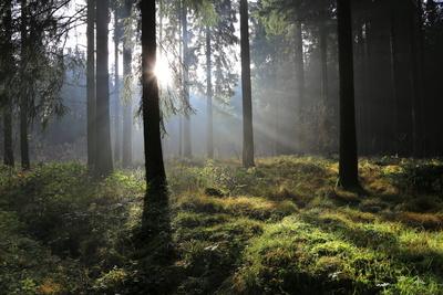 Herbstwald 9