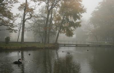 an einem stillen nebelmorgen