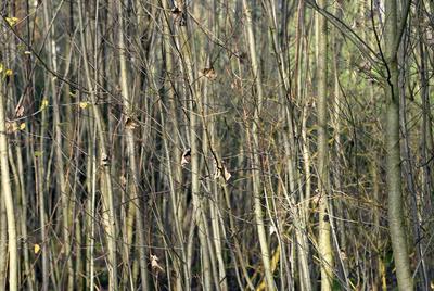 Herbstwald 13