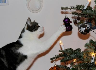 Des Katers Weihnachtsfreuden...01