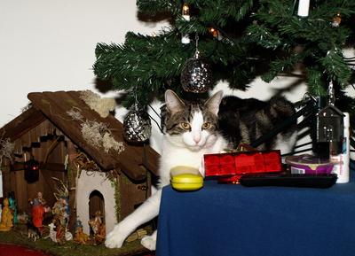 Des Katers Weihnachtsfreuden...03