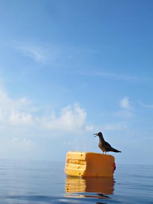 Vogel in Ruheposition