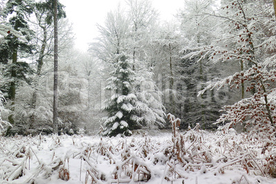 Endlich Winteranfang