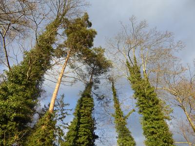 Eingepackte Bäume