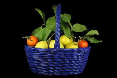 Zitrusfrüchte 4