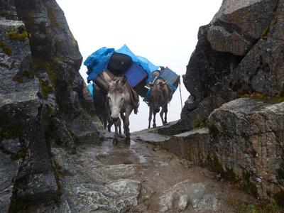 Esel beim Trekking in Peru
