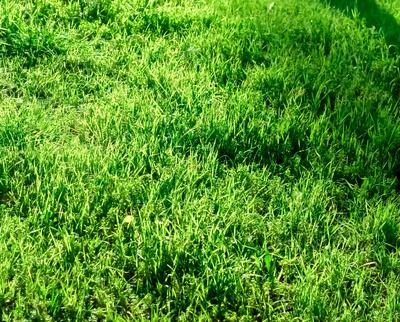 Sonnige Grünfläche