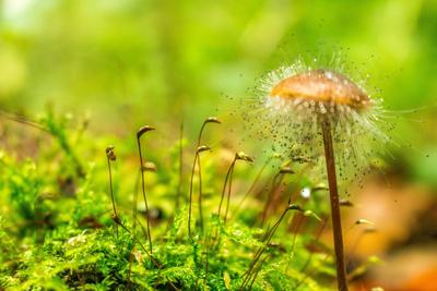 Kleiner Pilz im großen Wald